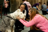 Therapy Dogs at University of Pittsburgh
