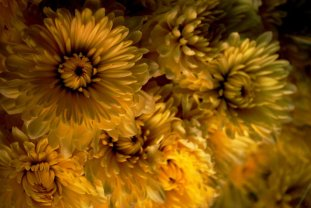 Golden_Universe_by_faelai