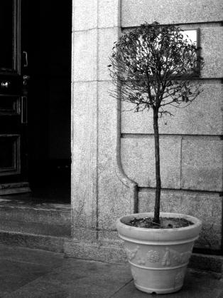 Tree_BW_02
